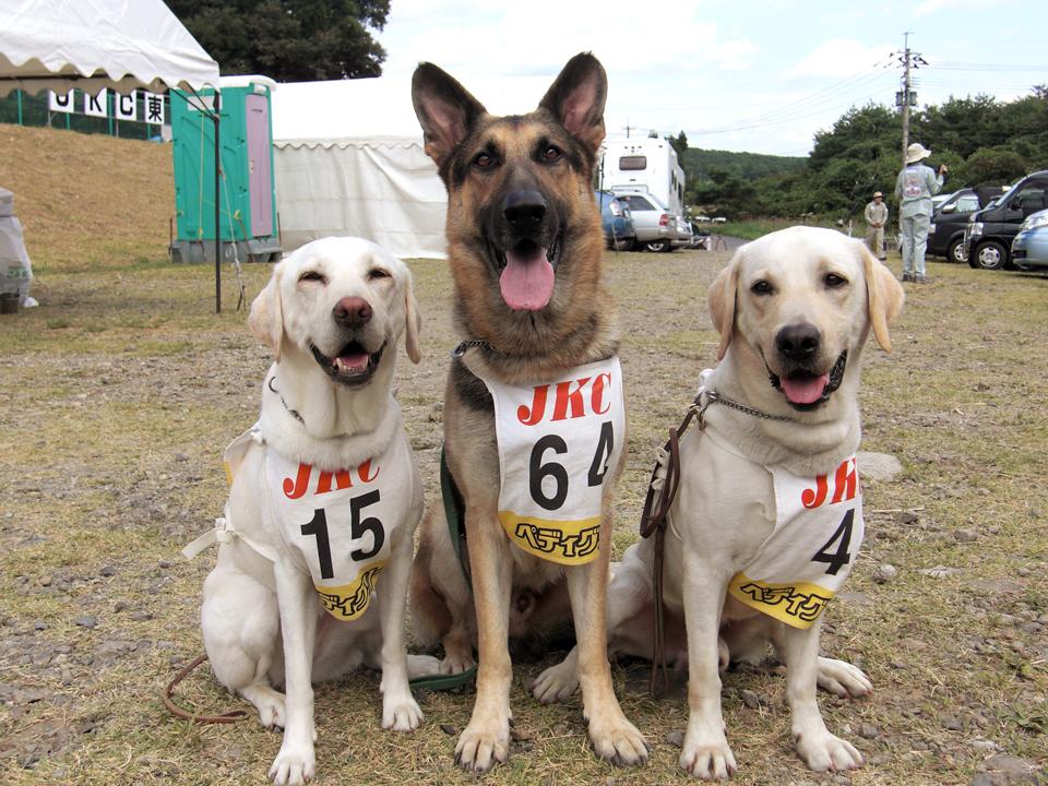 災害救助犬2